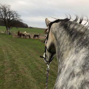 Natuurlijk-Paardenhouden-Limburg