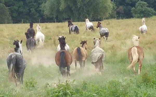 Natural Horsemanship Limburg