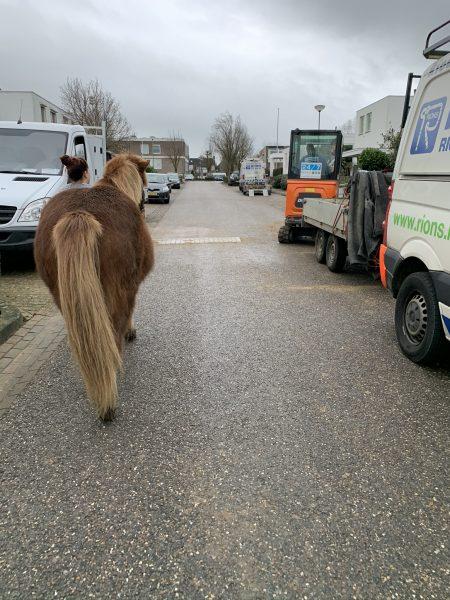 verkeersmak paard