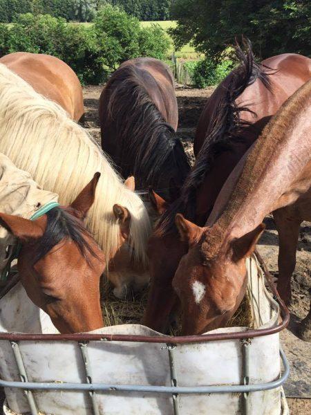 Natural Horsemanship1
