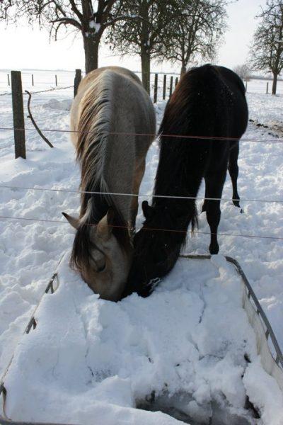Natural Horsemanship2